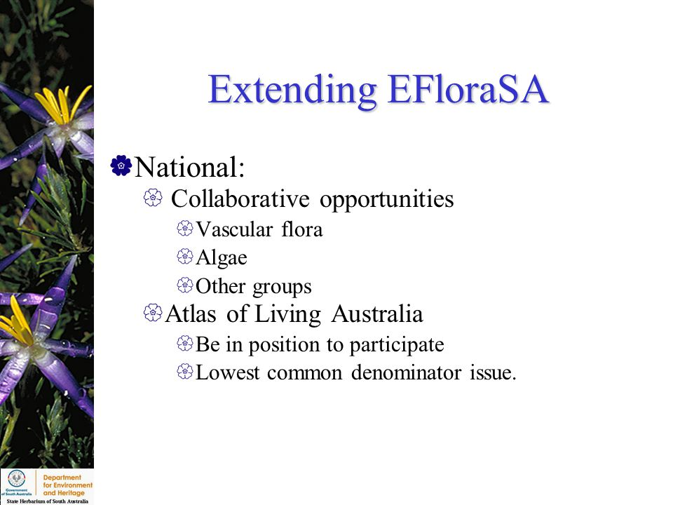 Extending EFloraSA  National:  Collaborative opportunities  Vascular flora  Algae  Other groups  Atlas of Living Australia  Be in position to participate  Lowest common denominator issue.