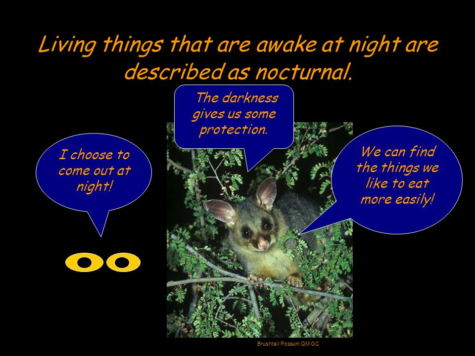 Animals that come out at night often have darker body coverings than their day time relatives.