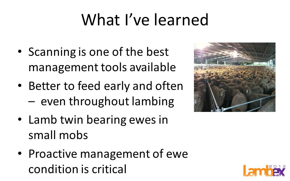 What I've learned Scanning is one of the best management tools available Better to feed early and often – even throughout lambing Lamb twin bearing ewes in small mobs Proactive management of ewe condition is critical