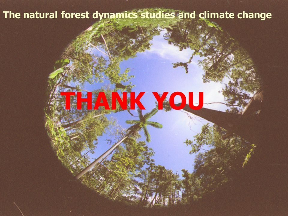 The natural forest dynamics studies and climate change THANK YOU