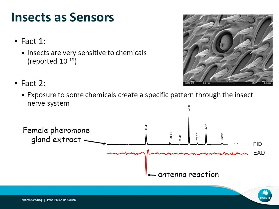 Insects as Sensors Fact 1: Insects are very sensitive to chemicals (reported 10 -19 ) Fact 2: Exposure to some chemicals create a specific pattern through the insect nerve system 1 9 : 4 0 2 3 : 4 5 2 5 : 2 1 2 6 : 5 2 2 1 : 5 4 2 4 : 3 2 2 2 : 4 9 EAD FID antenna reaction Female pheromone gland extract