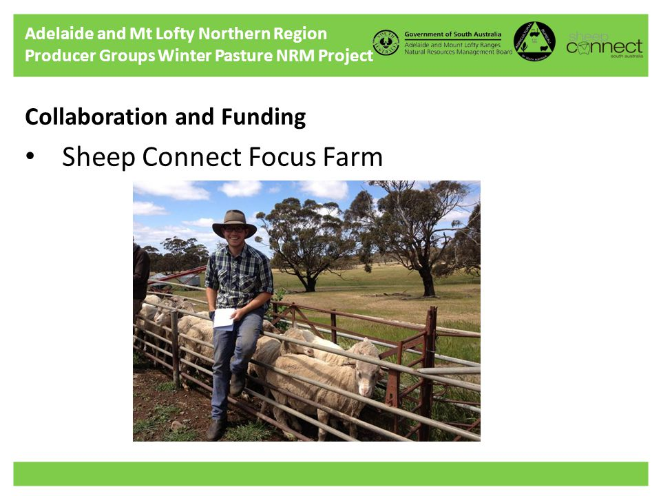 Adelaide and Mt Lofty Northern Region Producer Groups Winter Pasture NRM Project Collaboration and Funding Sheep Connect Focus Farm