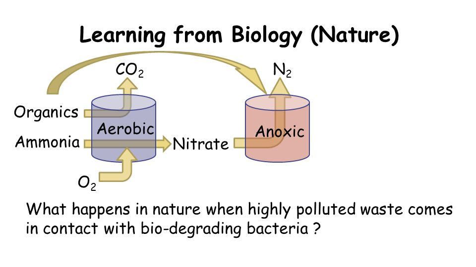 Learning from Biology (Nature) O2O2 CO 2 Organics Nitrate What happens in nature when highly polluted waste comes in contact with bio-degrading bacteria .