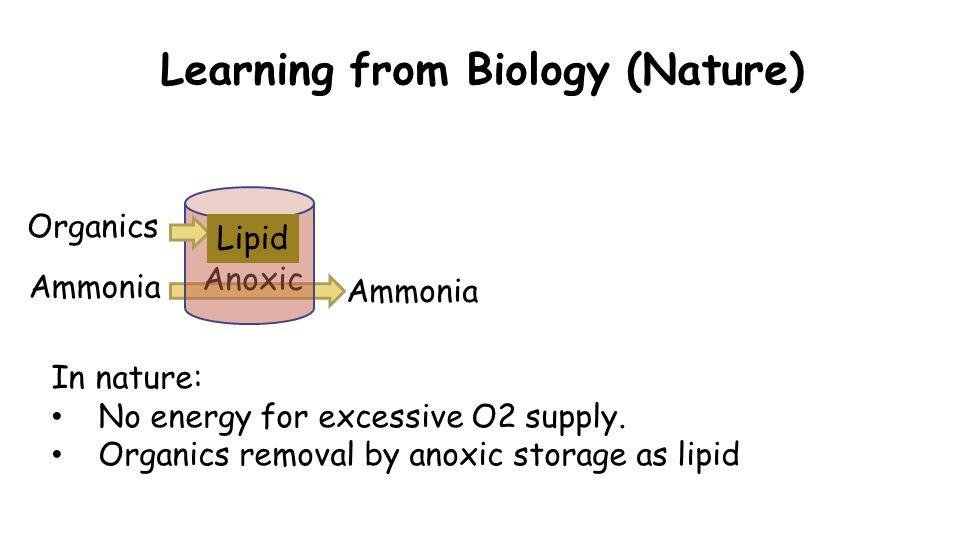 Learning from Biology (Nature) Organics Ammonia In nature: No energy for excessive O2 supply.