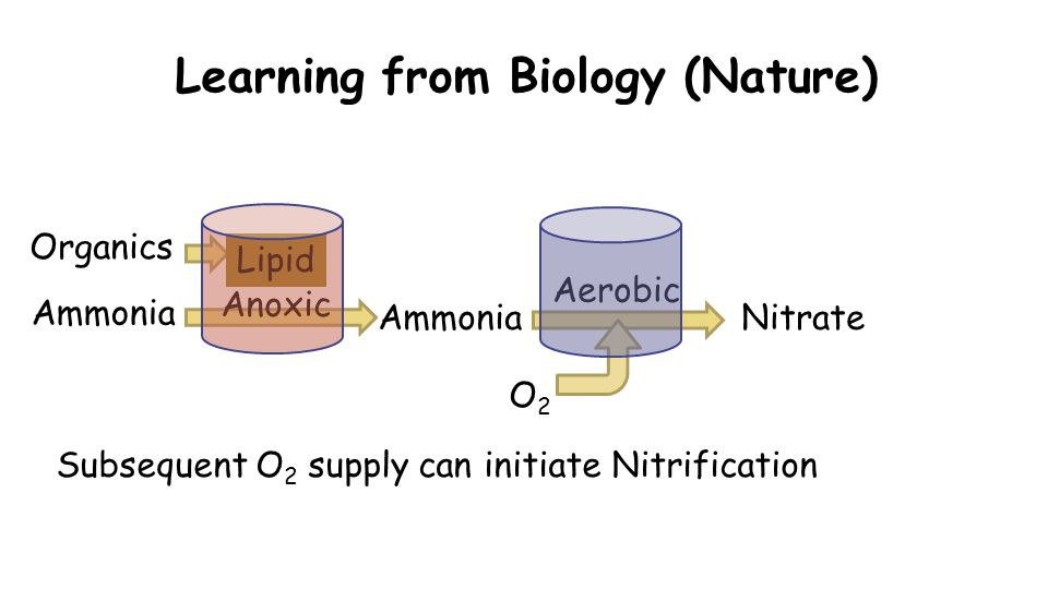 Learning from Biology (Nature) Organics Ammonia Subsequent O 2 supply can initiate Nitrification Anoxic Aerobic Ammonia Lipid Nitrate O2O2