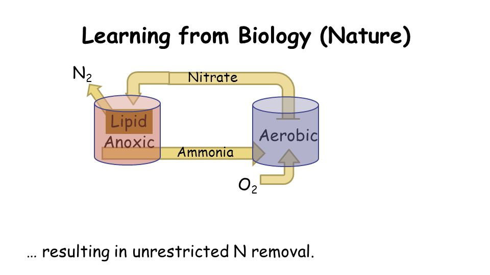 Learning from Biology (Nature) Ammonia Anoxic Aerobic Lipid O2O2 N2N2 Nitrate … resulting in unrestricted N removal.