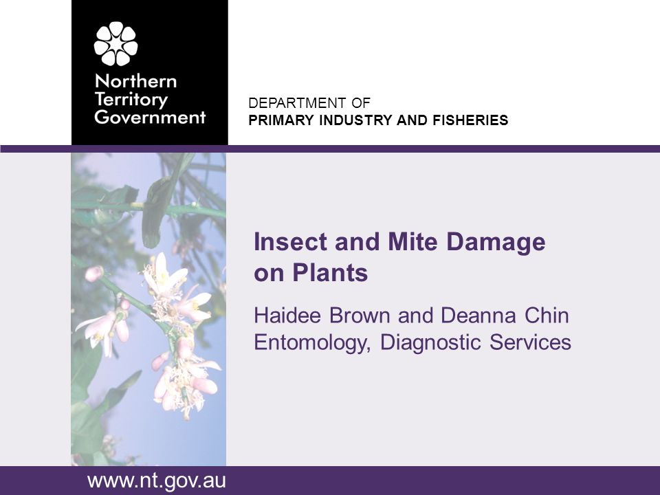 DEPARTMENT OF PRIMARY INDUSTRY AND FISHERIES www.nt.gov.au Haidee Brown and Deanna Chin Entomology, Diagnostic Services Insect and Mite Damage on Plants