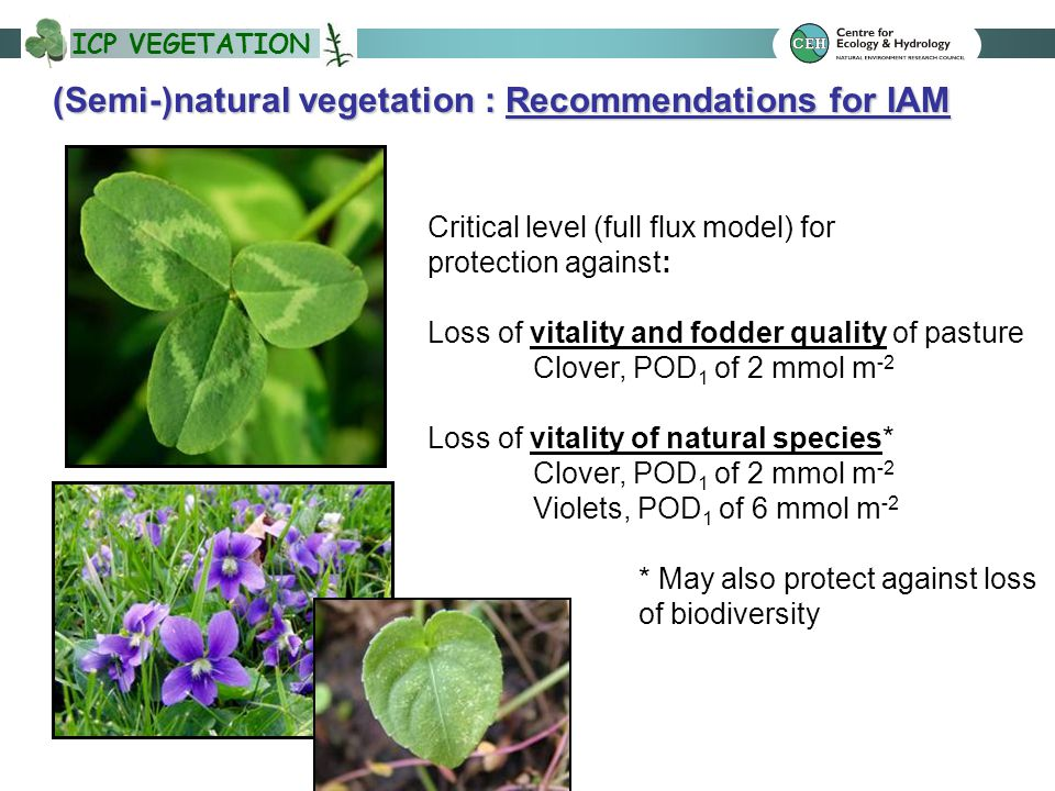 ICP VEGETATION (Semi-)natural vegetation : Recommendations for IAM Critical level (full flux model) for protection against: Loss of vitality and fodder quality of pasture Clover, POD 1 of 2 mmol m -2 Loss of vitality of natural species* Clover, POD 1 of 2 mmol m -2 Violets, POD 1 of 6 mmol m -2 * May also protect against loss of biodiversity