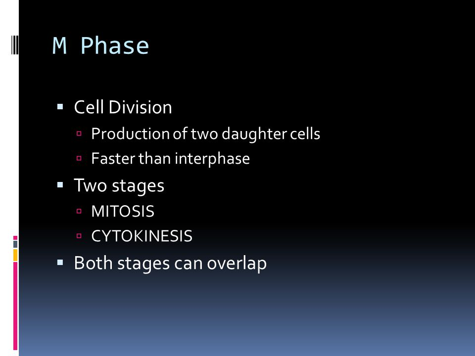 M Phase  Cell Division  Production of two daughter cells  Faster than interphase  Two stages  MITOSIS  CYTOKINESIS  Both stages can overlap