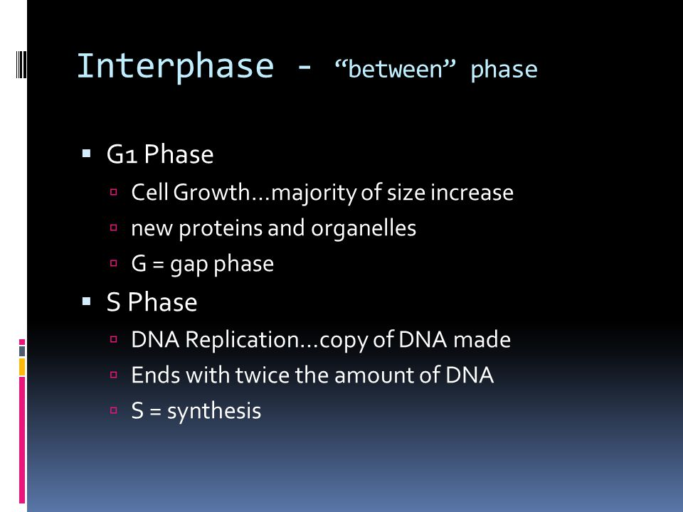 Interphase - between phase  G1 Phase  Cell Growth…majority of size increase  new proteins and organelles  G = gap phase  S Phase  DNA Replication…copy of DNA made  Ends with twice the amount of DNA  S = synthesis