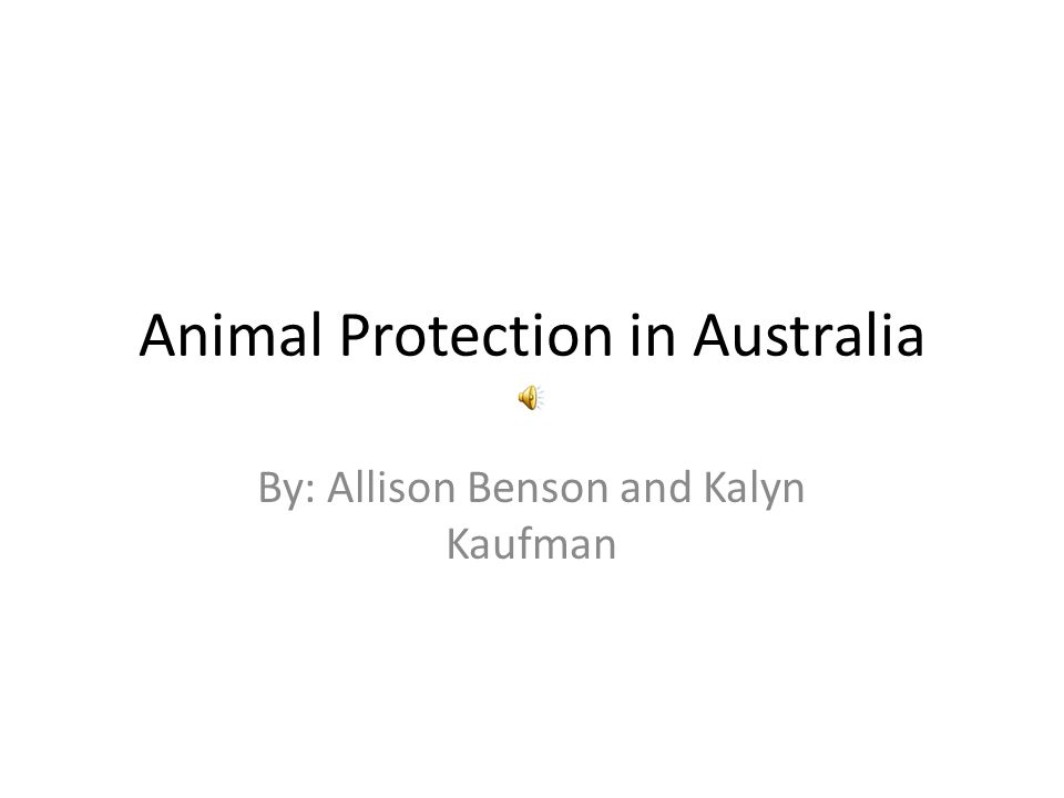 Animal Protection in Australia By: Allison Benson and Kalyn Kaufman
