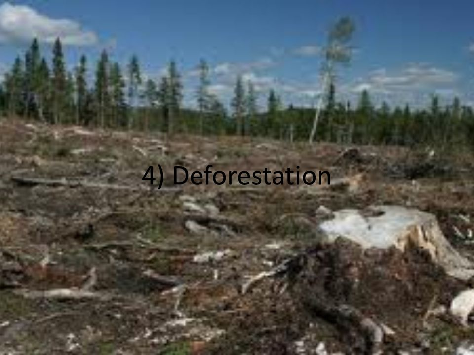 4) Deforestation