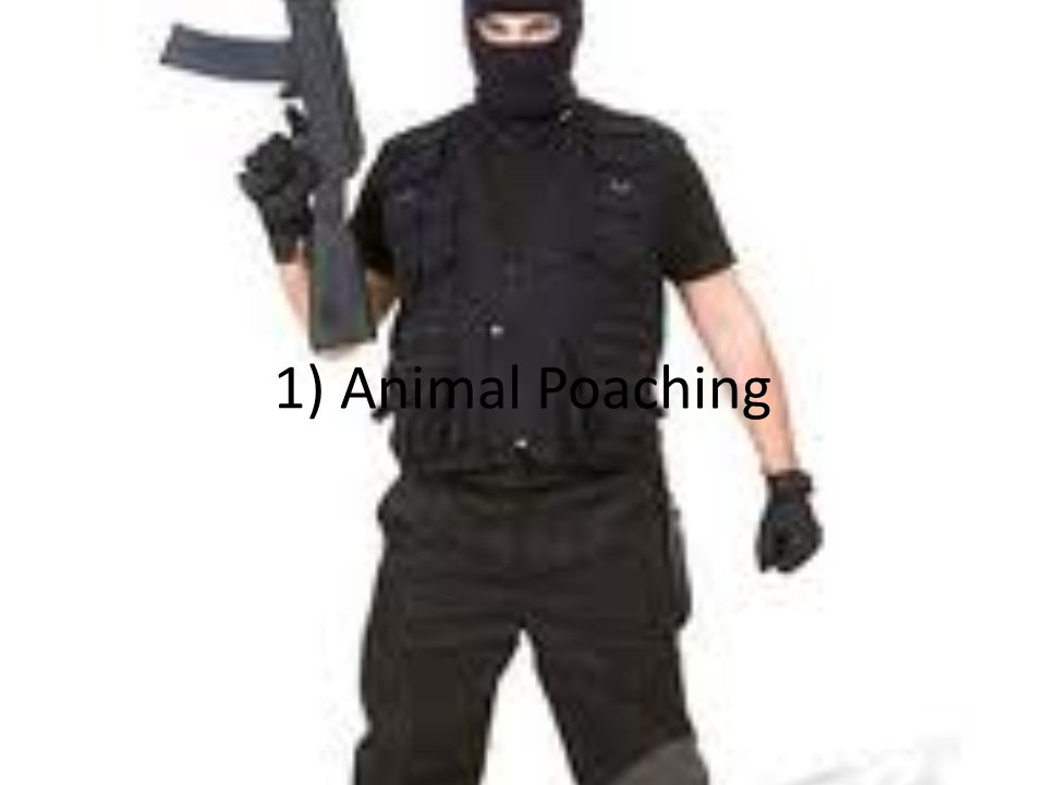1) Animal Poaching