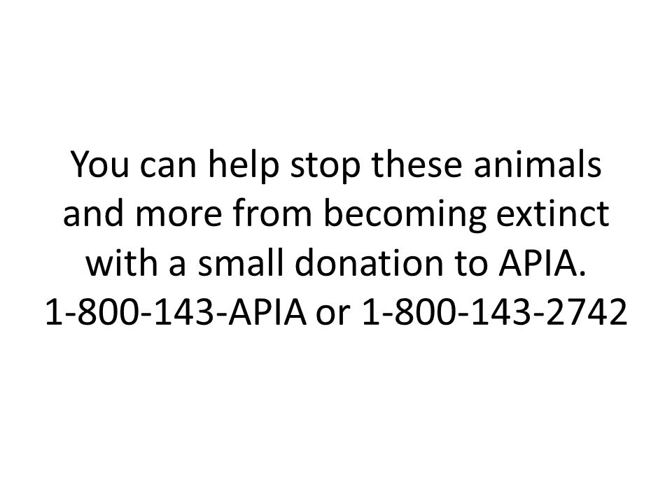 You can help stop these animals and more from becoming extinct with a small donation to APIA.