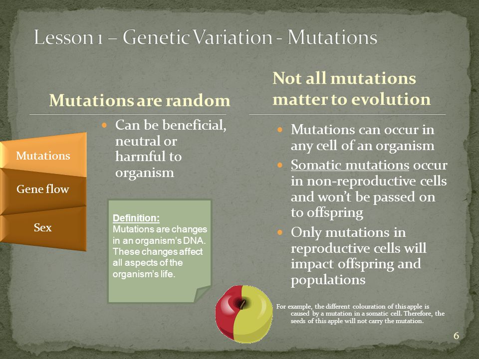 6 Mutations are random Can be beneficial, neutral or harmful to organism Mutations can occur in any cell of an organism Somatic mutations occur in non-reproductive cells and won't be passed on to offspring Only mutations in reproductive cells will impact offspring and populations For example, the different colouration of this apple is caused by a mutation in a somatic cell.