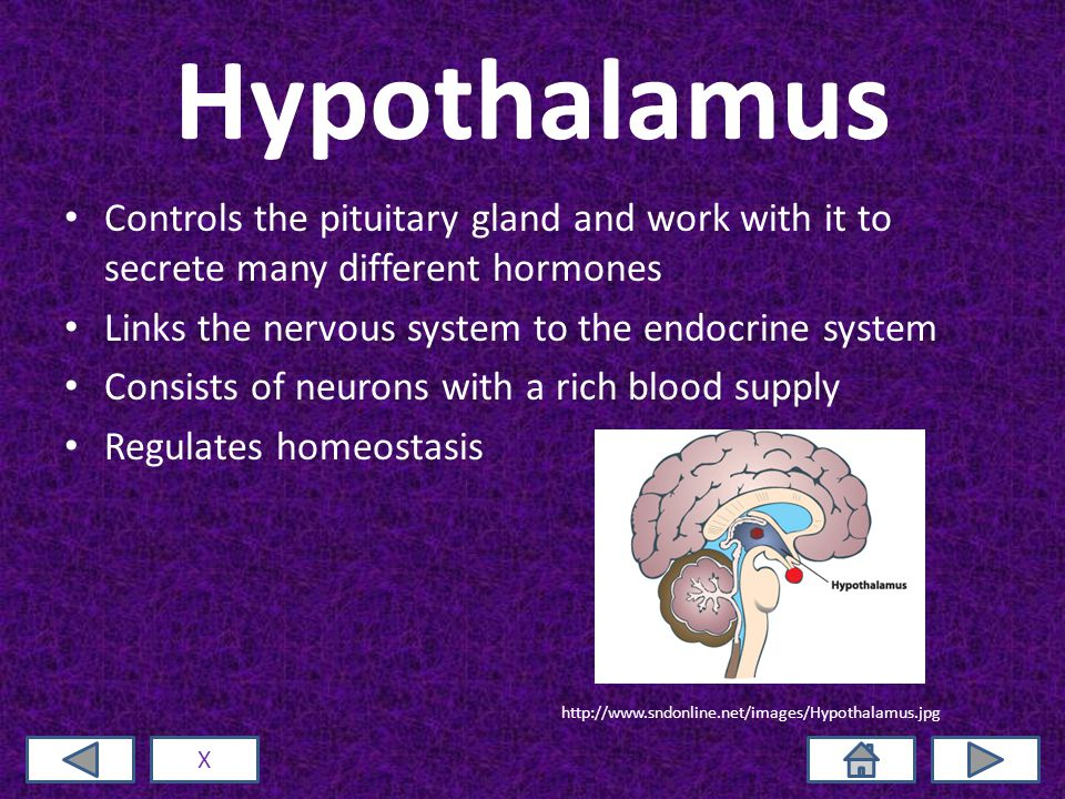 Hypothalamus Controls the pituitary gland and work with it to secrete many different hormones Links the nervous system to the endocrine system Consists of neurons with a rich blood supply Regulates homeostasis X http://www.sndonline.net/images/Hypothalamus.jpg