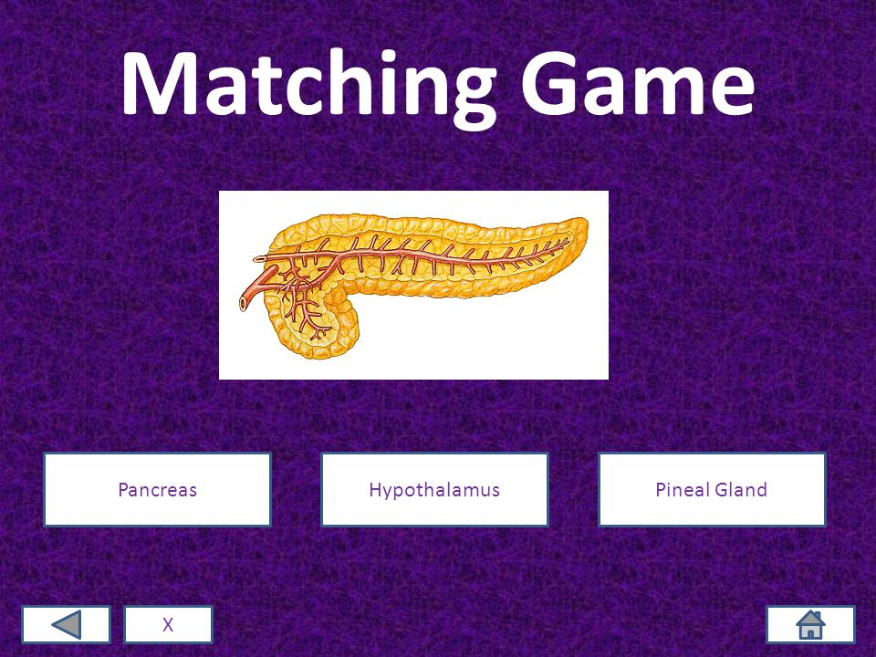 Matching Game X PancreasHypothalamusPineal Gland
