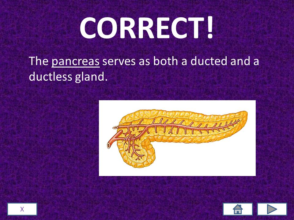 CORRECT! The pancreas serves as both a ducted and a ductless gland. X