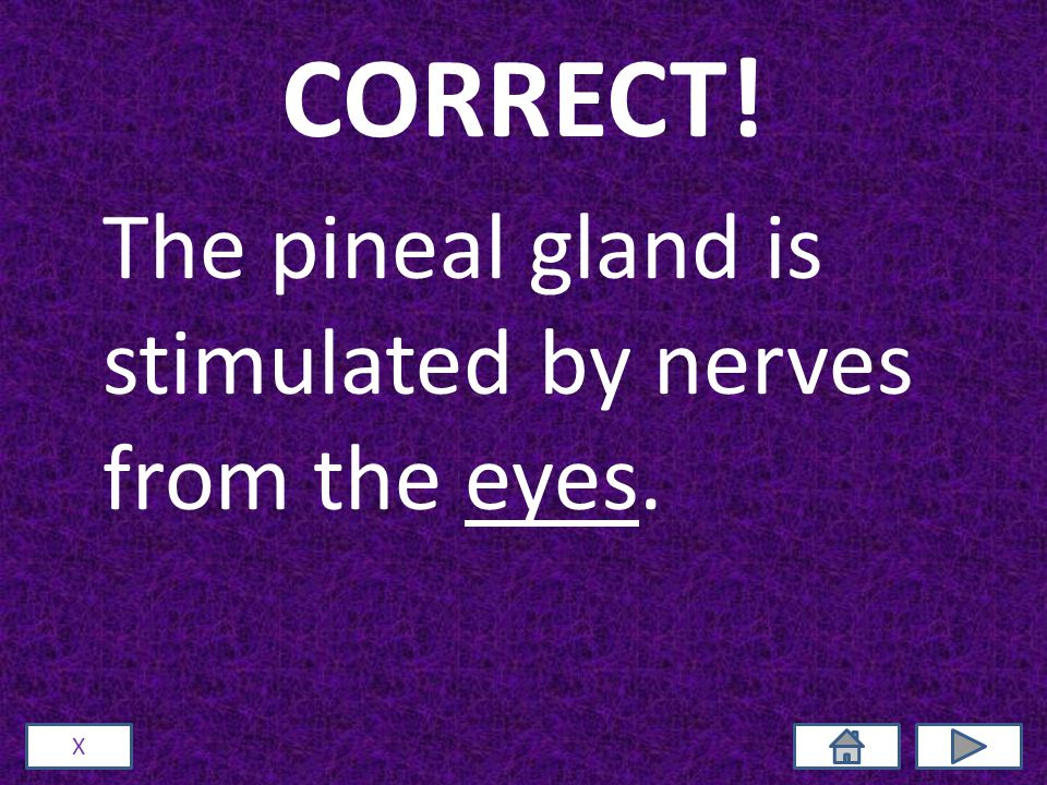 CORRECT! The pineal gland is stimulated by nerves from the eyes. X