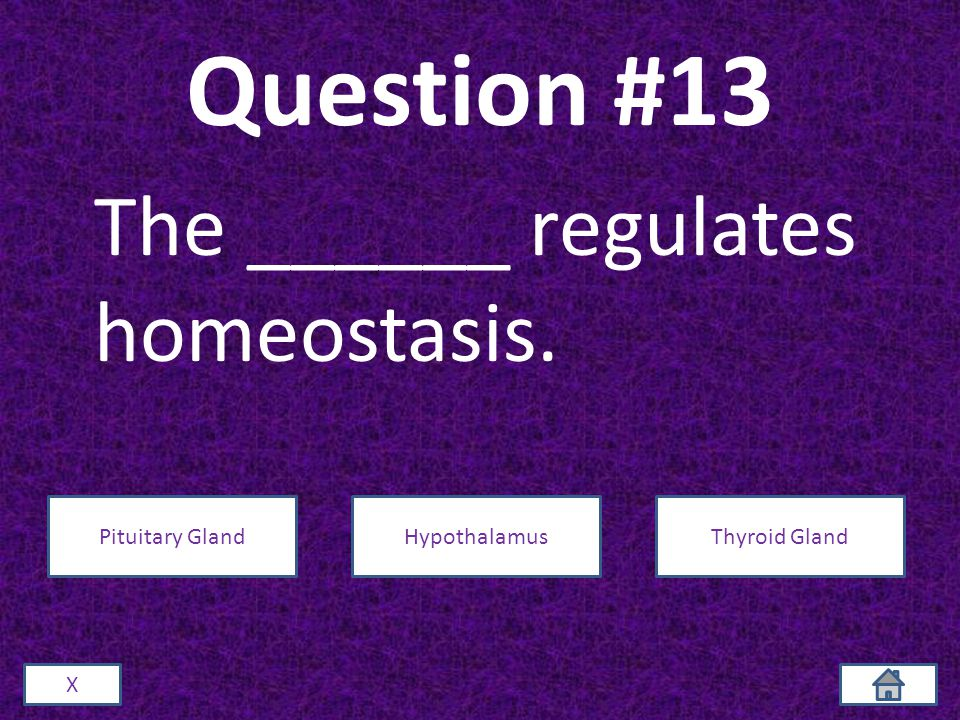 Question #13 The ______ regulates homeostasis. X Pituitary GlandHypothalamusThyroid Gland