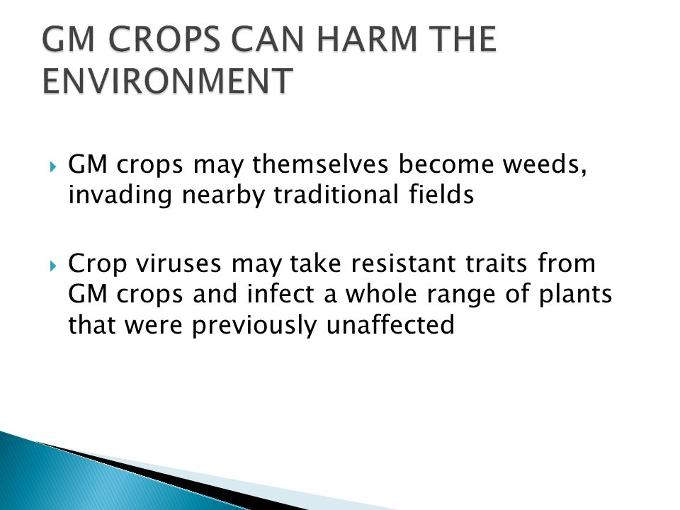  GM crops may themselves become weeds, invading nearby traditional fields  Crop viruses may take resistant traits from GM crops and infect a whole range of plants that were previously unaffected