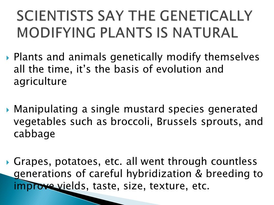  Plants and animals genetically modify themselves all the time, it's the basis of evolution and agriculture  Manipulating a single mustard species generated vegetables such as broccoli, Brussels sprouts, and cabbage  Grapes, potatoes, etc.