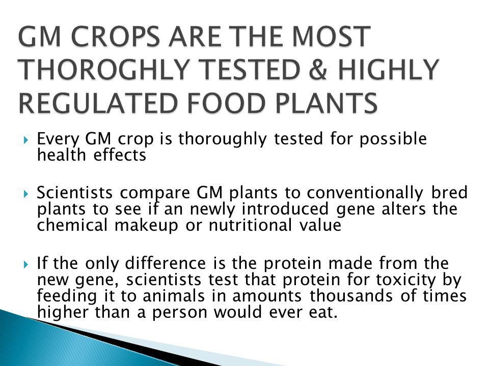  Every GM crop is thoroughly tested for possible health effects  Scientists compare GM plants to conventionally bred plants to see if an newly introduced gene alters the chemical makeup or nutritional value  If the only difference is the protein made from the new gene, scientists test that protein for toxicity by feeding it to animals in amounts thousands of times higher than a person would ever eat.
