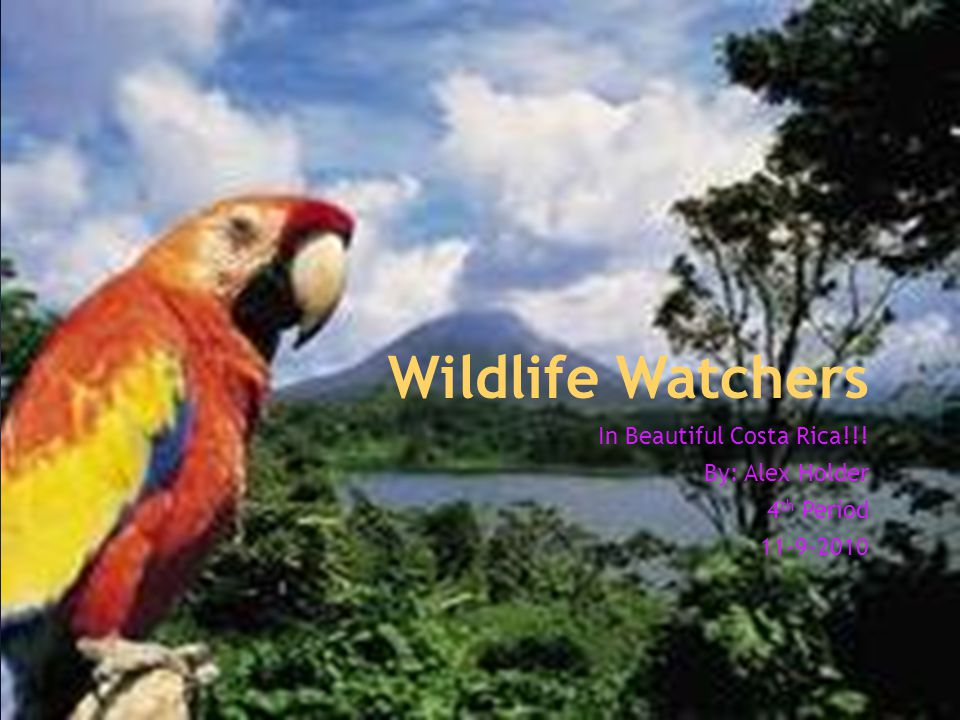 Wildlife Watchers In Beautiful Costa Rica!!! By: Alex Holder 4 th Period 11-9-2010