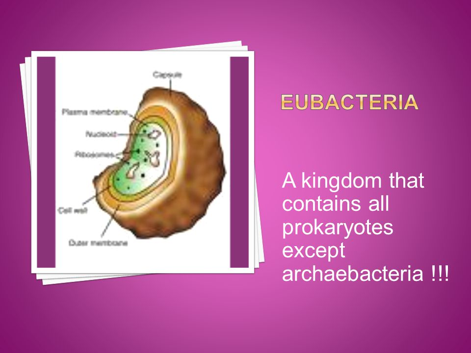 A kingdom that contains all prokaryotes except archaebacteria !!!