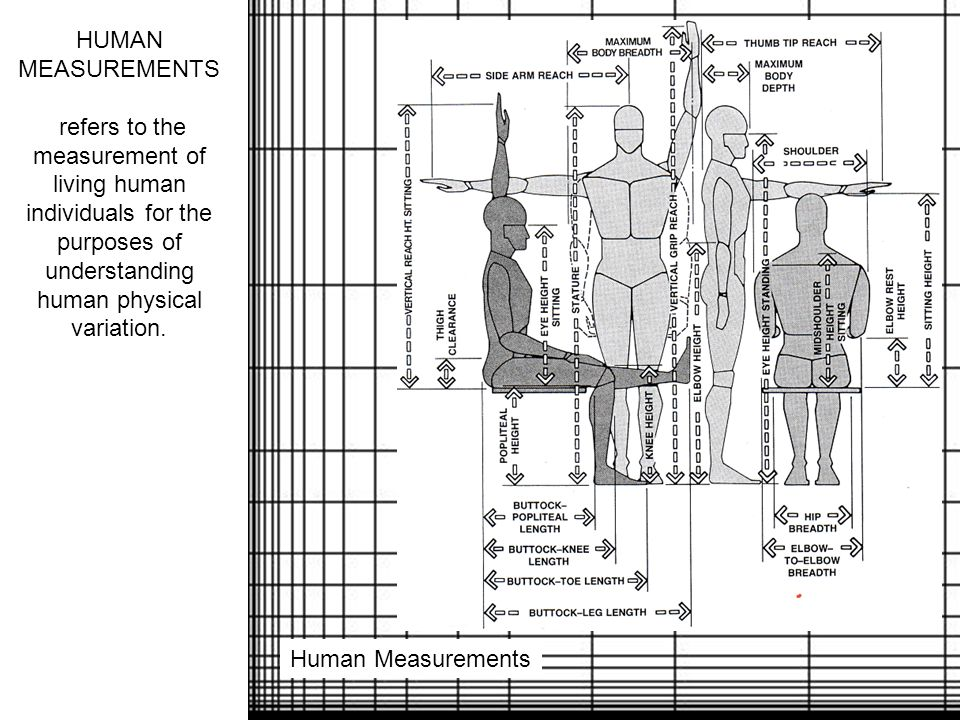 HUMAN MEASUREMENTS refers to the measurement of living human individuals for the purposes of understanding human physical variation.