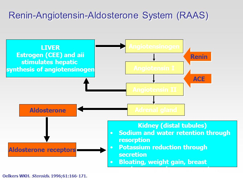 Renin-Angiotensin-Aldosterone System (RAAS) LIVER Estrogen (CEE) and aii stimulates hepatic synthesis of angiotensinogen LIVER Estrogen (CEE) and aii stimulates hepatic synthesis of angiotensinogen Angiotensin I Angiotensinogen Angiotensin II Renin ACE Adrenal gland Aldosterone Aldosterone receptors Kidney (distal tubules) Sodium and water retention through resorption Potassium reduction through secretion Bloating, weight gain, breast tenderness, and water retention Kidney (distal tubules) Sodium and water retention through resorption Potassium reduction through secretion Bloating, weight gain, breast tenderness, and water retention Oelkers WKH.