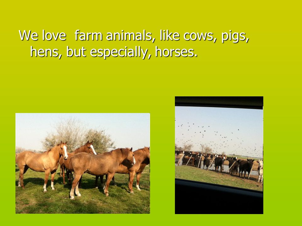 We are going to tell you about our farms, we've chosen these places because we love animals and there we feel free.