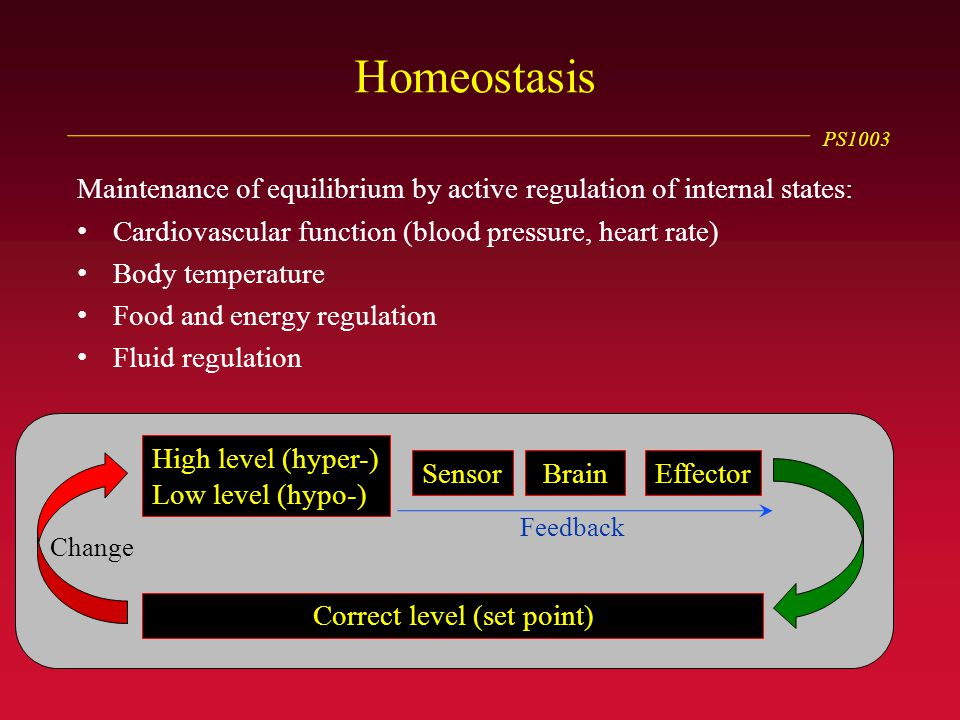 PS1003 Homeostasis Maintenance of equilibrium by active regulation of internal states: Cardiovascular function (blood pressure, heart rate) Body temperature Food and energy regulation Fluid regulation High level (hyper-) Low level (hypo-) Correct level (set point) SensorEffectorBrain Change Feedback