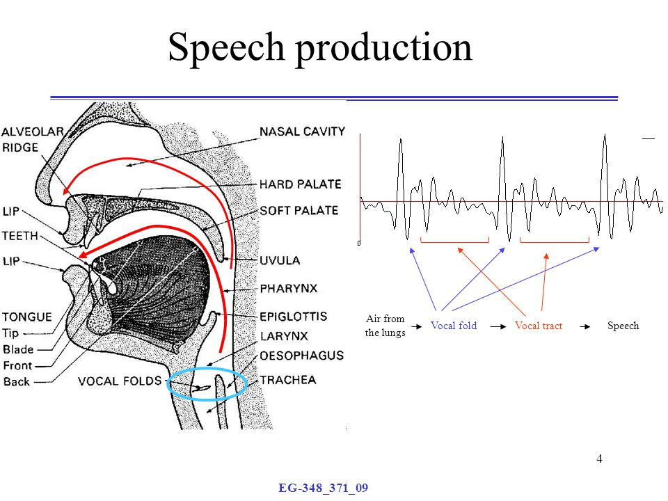 EG-348_371_09 4 Speech production Air from the lungs Vocal foldVocal tractSpeech