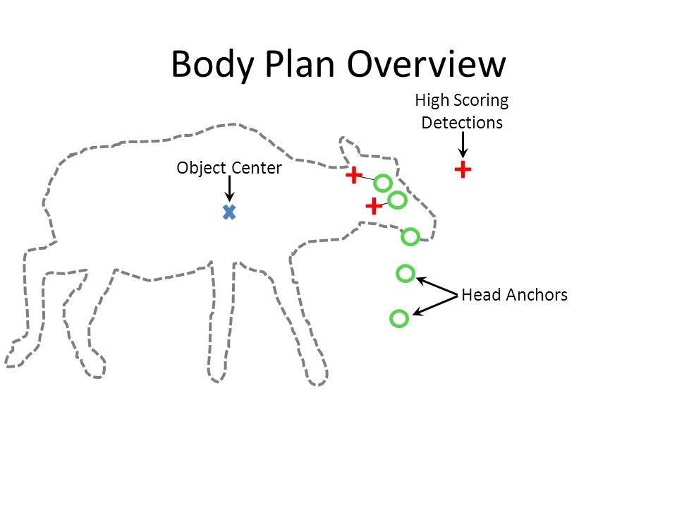 Body Plan Overview Object Center + + + Head Anchors High Scoring Detections
