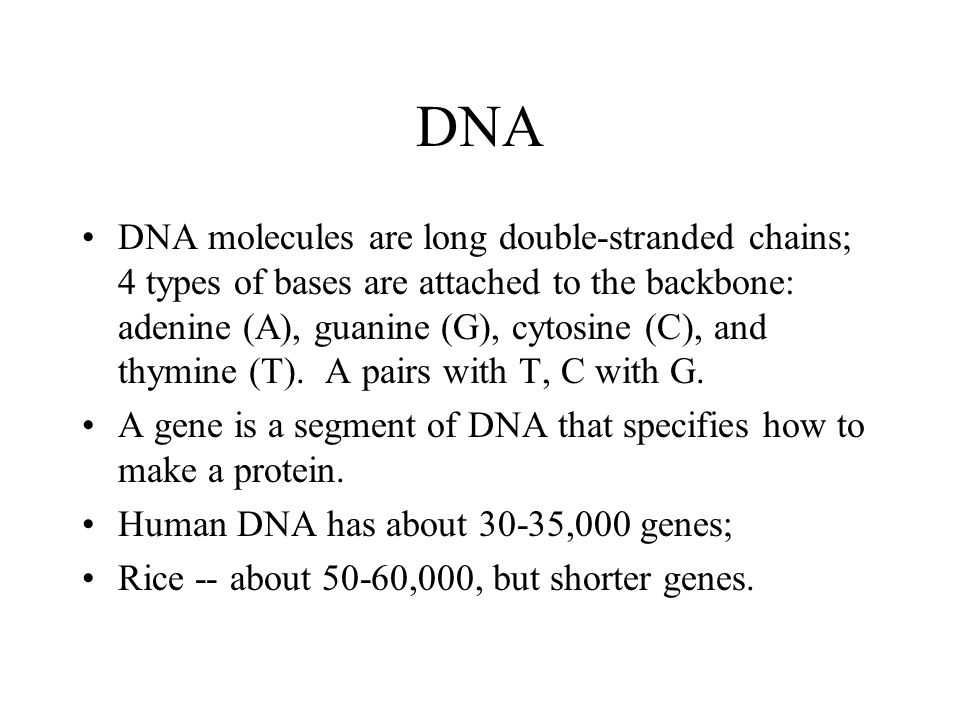 DNA DNA molecules are long double-stranded chains; 4 types of bases are attached to the backbone: adenine (A), guanine (G), cytosine (C), and thymine (T).