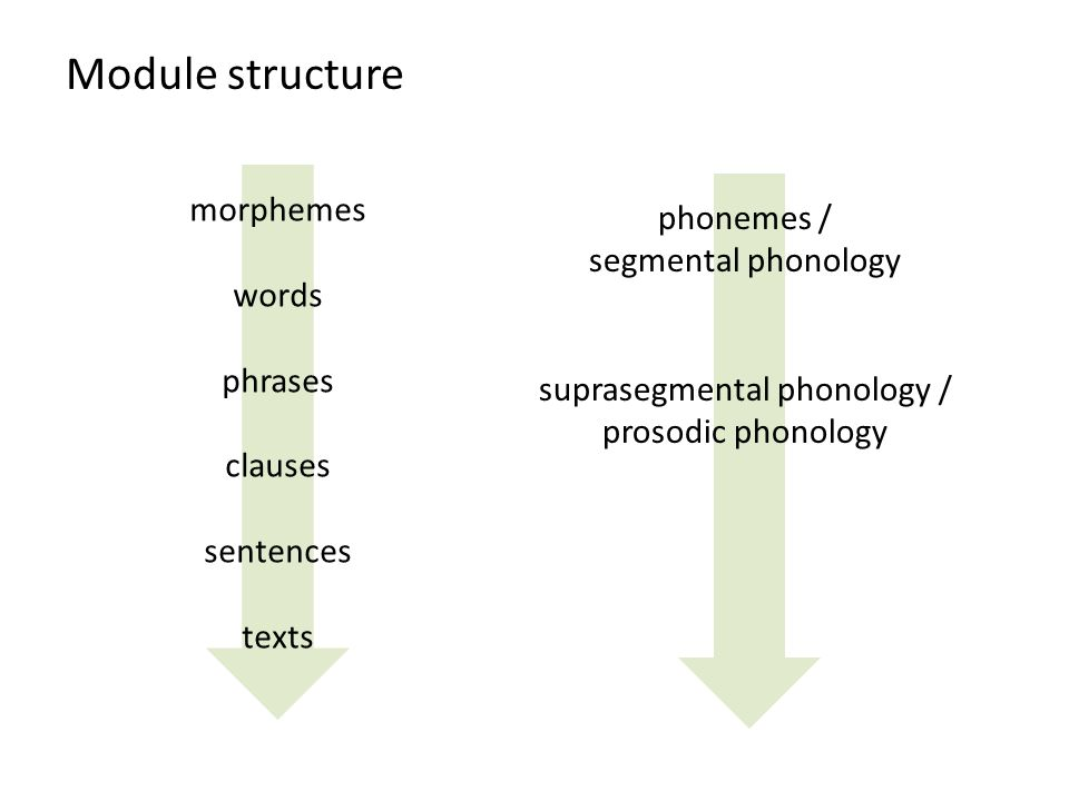 Module structure morphemes words phrases clauses sentences texts phonemes / segmental phonology suprasegmental phonology / prosodic phonology