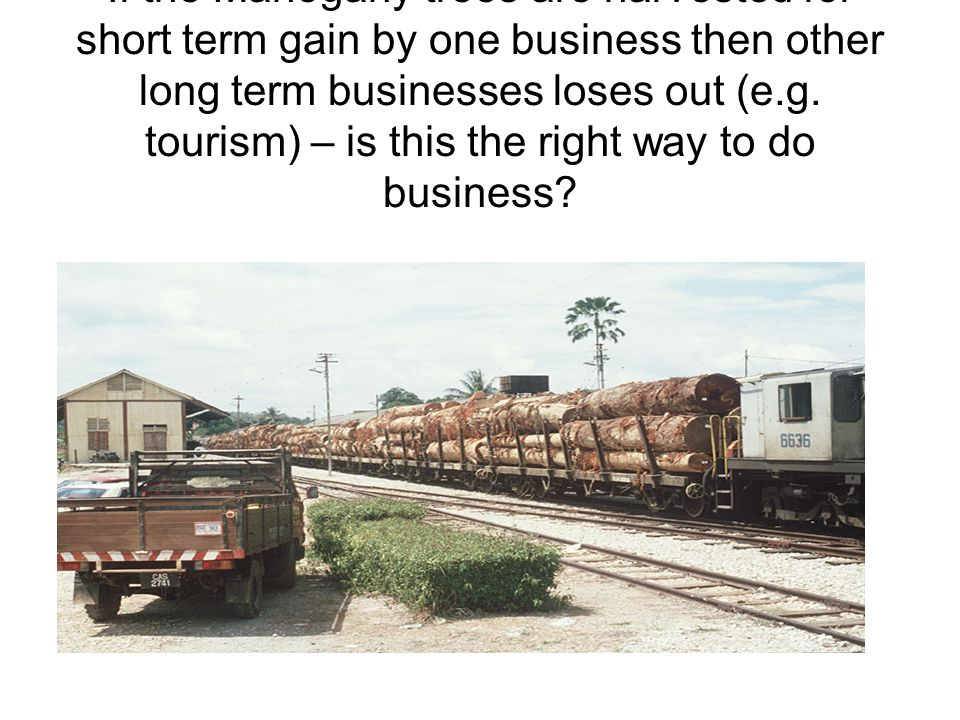 If the Mahogany trees are harvested for short term gain by one business then other long term businesses loses out (e.g.