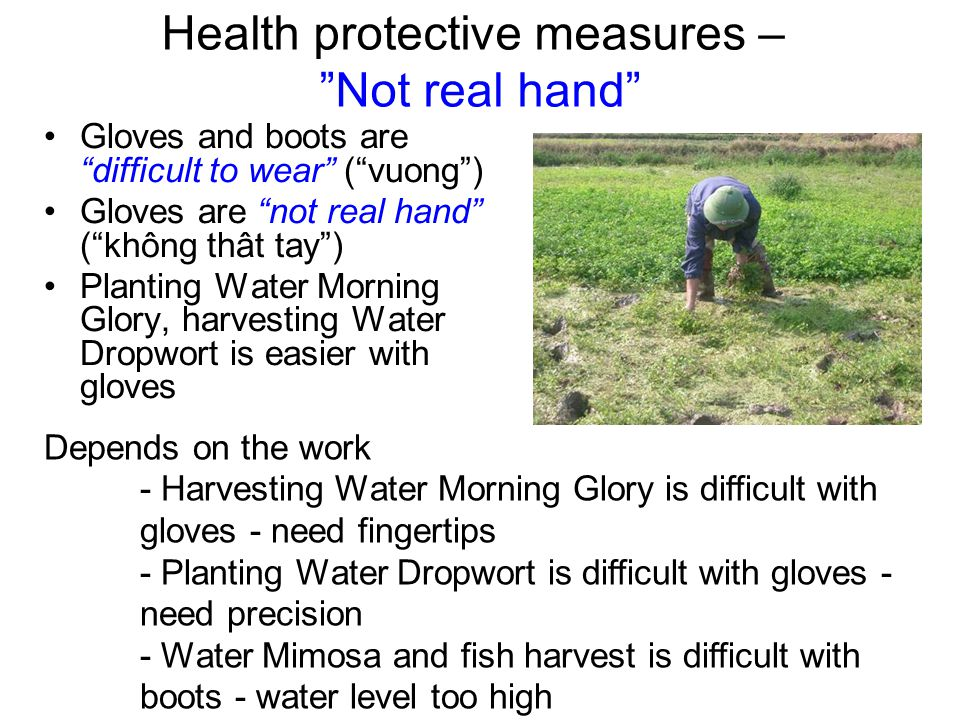 Health protective measures – Not real hand Gloves and boots are difficult to wear ( vuong ) Gloves are not real hand ( không thât tay ) Planting Water Morning Glory, harvesting Water Dropwort is easier with gloves Depends on the work - Harvesting Water Morning Glory is difficult with gloves - need fingertips - Planting Water Dropwort is difficult with gloves - need precision - Water Mimosa and fish harvest is difficult with boots - water level too high