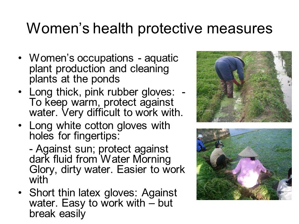 Women's health protective measures Women's occupations - aquatic plant production and cleaning plants at the ponds Long thick, pink rubber gloves: - To keep warm, protect against water.