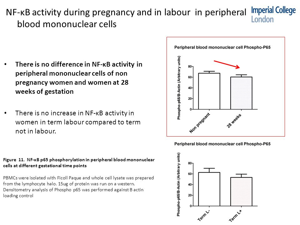 NF-κB activity during pregnancy and in labour in peripheral blood mononuclear cells Figure 11.