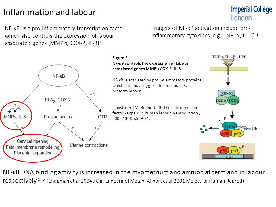 Triggers of NF-κB activation include pro- inflammatory cytokines e.g.