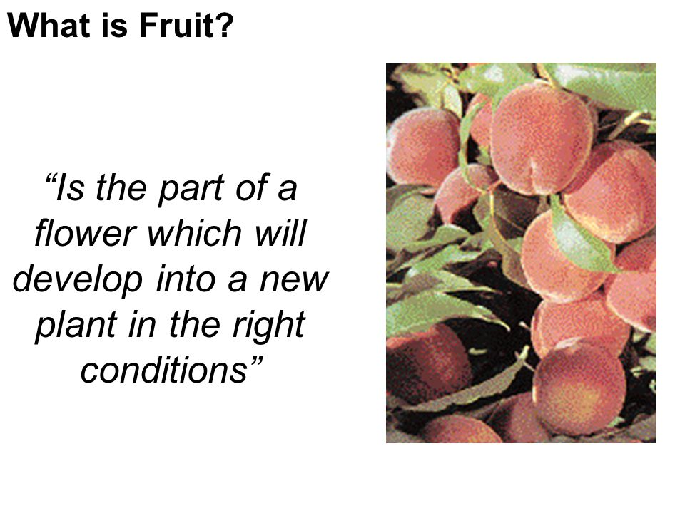 What is Fruit.