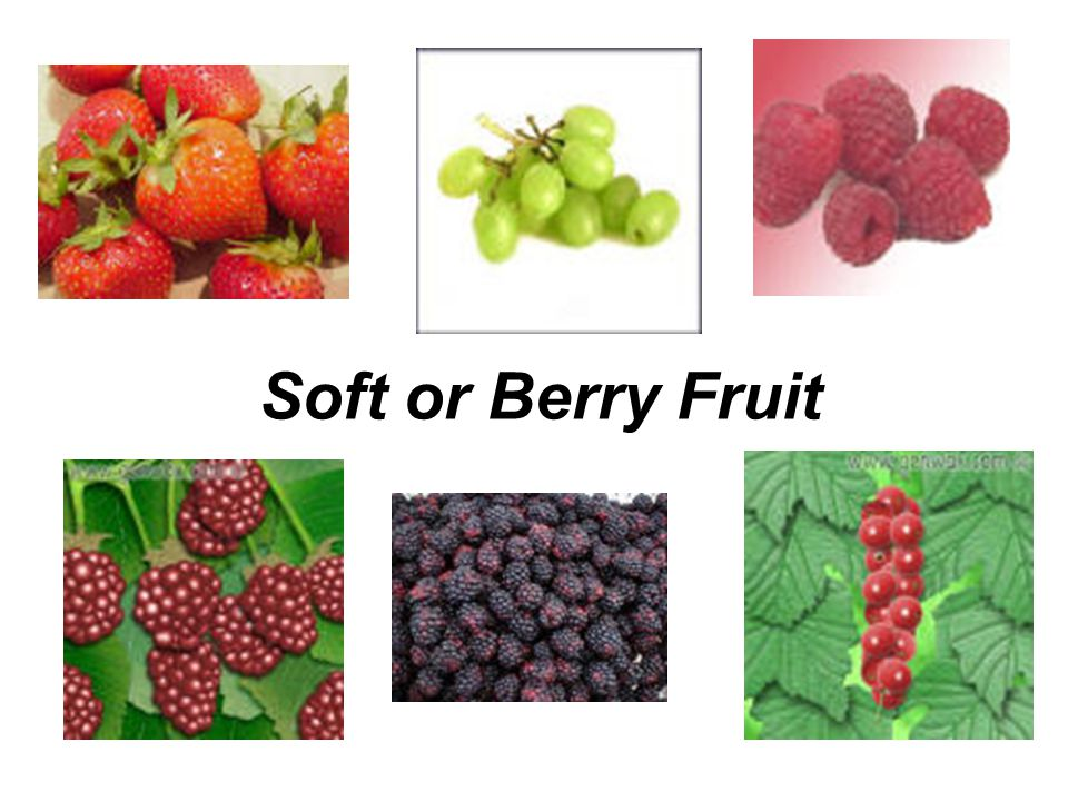 Soft or Berry Fruit