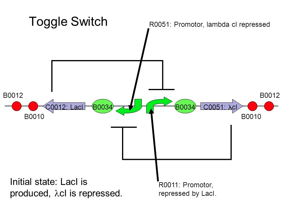 Toggle Switch B0034 R0011: Promotor, repressed by LacI.
