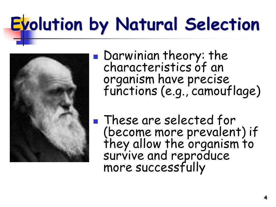 4 Evolution by Natural Selection Darwinian theory: the characteristics of an organism have precise functions (e.g., camouflage) These are selected for (become more prevalent) if they allow the organism to survive and reproduce more successfully