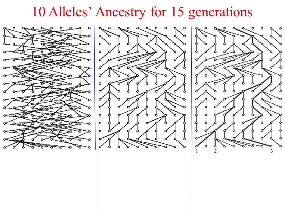 10 Alleles' Ancestry for 15 generations