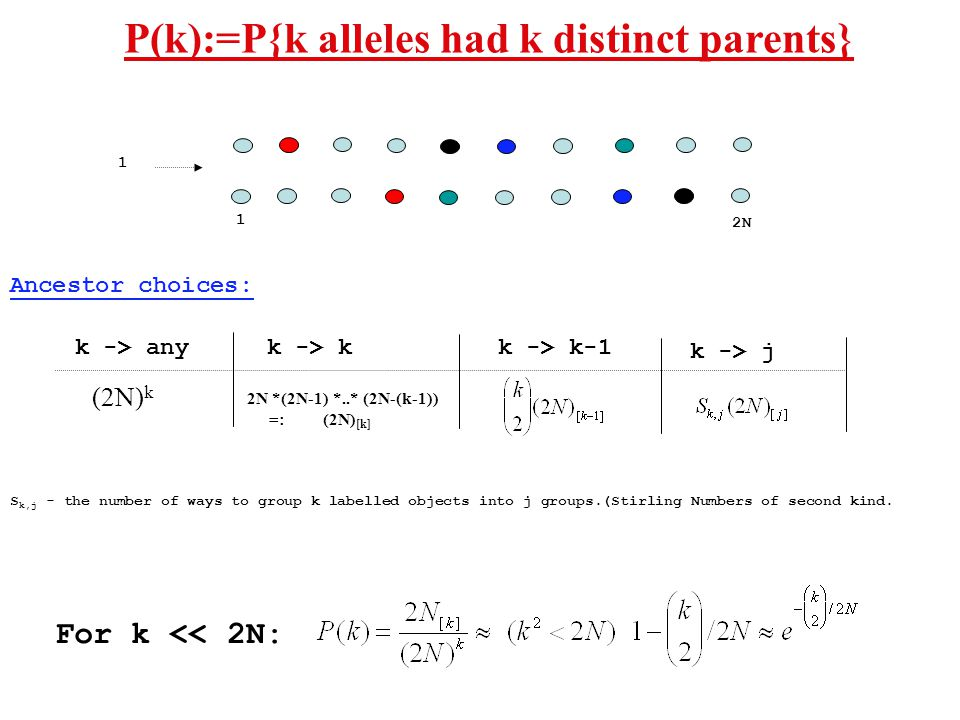 P(k):=P{k alleles had k distinct parents} 1 2N 1 2N *(2N-1) *..* (2N-(k-1)) =: (2N) [k] (2N) k k -> any k -> k k -> k-1 Ancestor choices: k -> j For k << 2N: S k,j - the number of ways to group k labelled objects into j groups.(Stirling Numbers of second kind.
