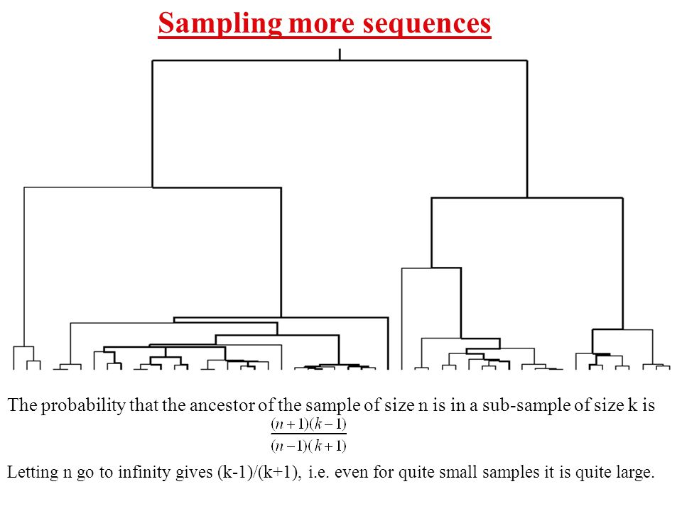 Sampling more sequences The probability that the ancestor of the sample of size n is in a sub-sample of size k is Letting n go to infinity gives (k-1)/(k+1), i.e.