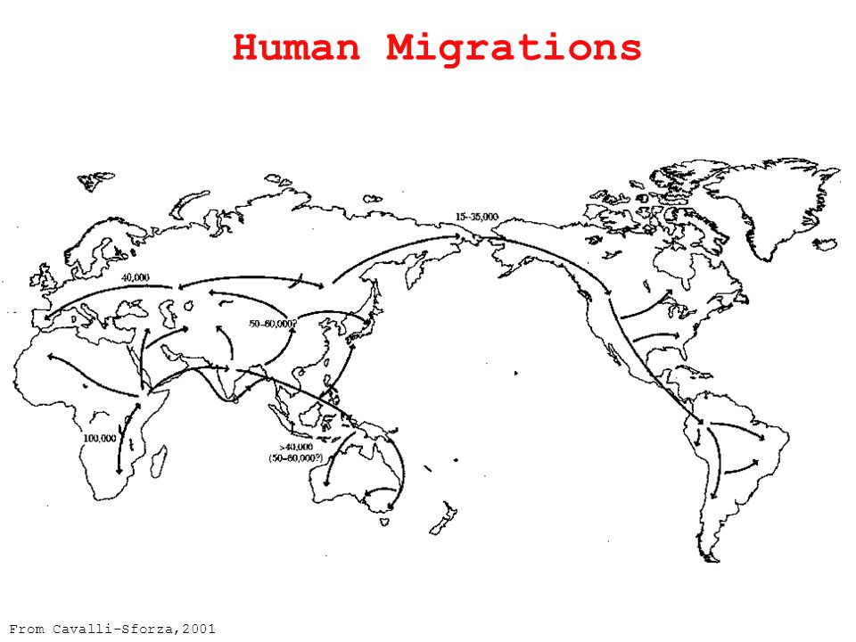 From Cavalli-Sforza,2001 Human Migrations